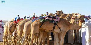 الاتحاد السعودي للهجن ينظم سباق مارثون للهجن بميدان تبوك بمناسبة اليوم الوطني ال 91
