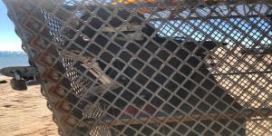 #عاجل حرس الحدود يوضح حقيقة جثة مياه منطقة تبوك