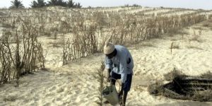 منظمة الفاو: السودان تواجه أزمة غذائية حادة