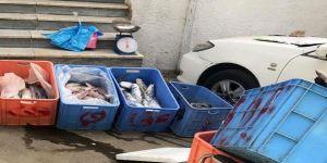 مصادرة وإتلاف 398 كجم من المواد الغذائية الغير صالحة للاستهلاك في المسفلة