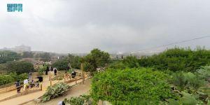 جسر بلجرشي النباتية تستهوي أهالي وزوار الباحة
